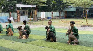 Dịch vụ huấn luyện chó cảnh khuyển tốt nhất tại Tphcm